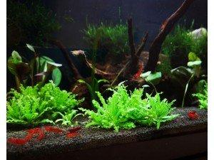 Bitkili Akvaryum İçin Kum Seçimi