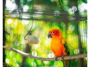 Papağan ve Egzotik Türler İçin Kafes Seçimi