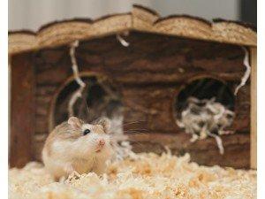 Hamster/Gonzales Kafesi Nasıl Seçilmelidir ?