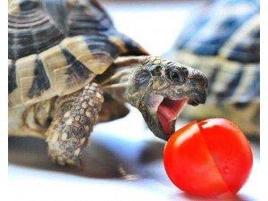 Su Kaplumbağalarında Beslenme