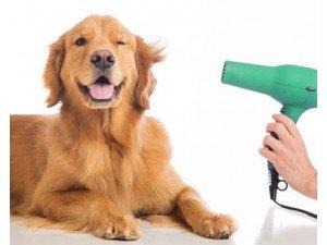 Köpeklerde Temizlik ve Bakım