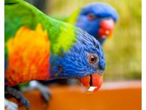 Kuşlar Neden Kusar?