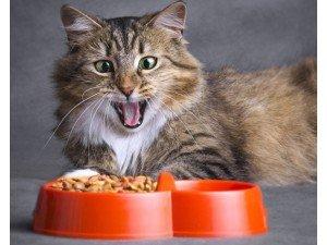 Kedi Ödül Mamaları Nasıl Kullanılmalıdır?