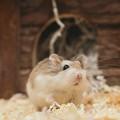 Hamster / Gonzales