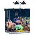 Reef Akvaryumları