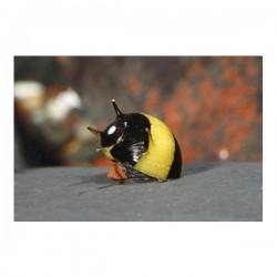 Sarı Siyah Boynuzlu Nerite Salyangoz 2 Adet