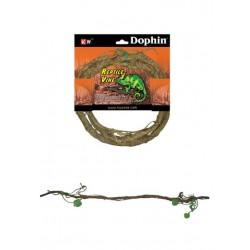 Dophin Sürüngen Aksesuar M