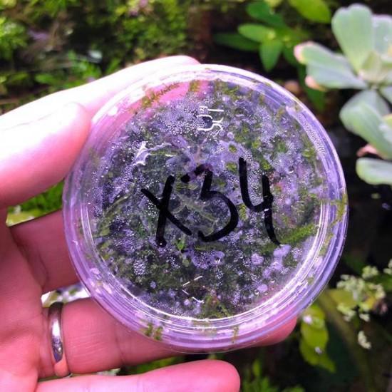 Erect Moss Kutu Canlı Bitki
