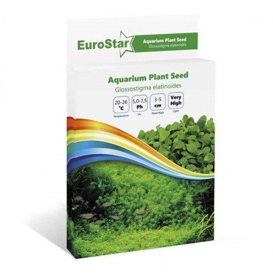 Eurostar Bitki Tohumu Glossostigma Elatinoides