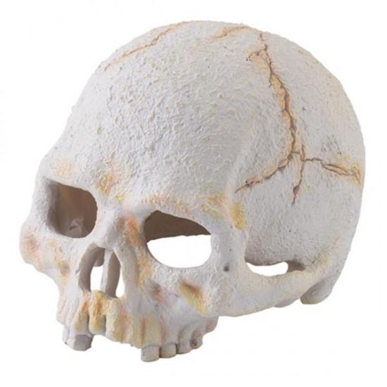 Exo Terra İnsan Kafatası S