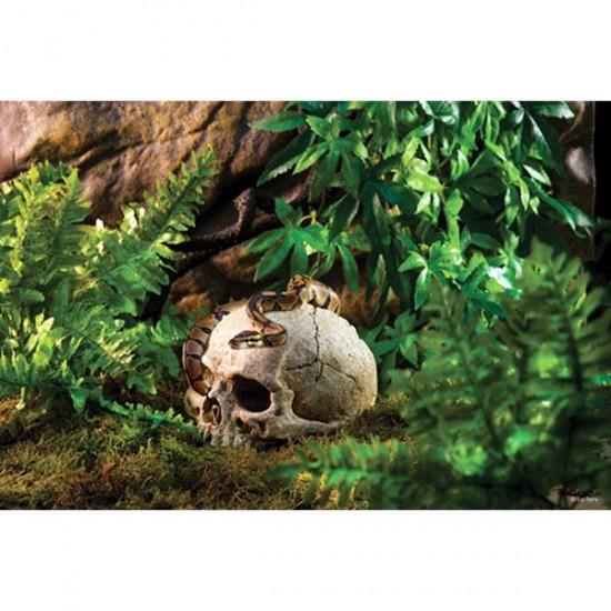 Exo Terra Kafatası Şekilli Sürüngen Yuvası