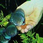 Jbl Novobits Granül Balık Yemi 1000gr Kovadan Bölme Balık