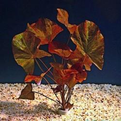 Nymphaea Lotus Zenkeri - Nilüfer Canlı Bitki Tek Soğan