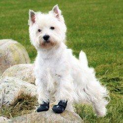 Trixie Köpek Yürüyüş Botu , 2 Adet , L , Siyah