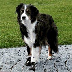 Trixie Köpek Yürüyüş Botu , 2 Adet , L-XL , Siyah