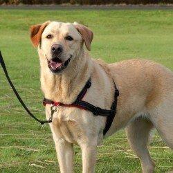 Trixie Köpek Yürüyüş Eğitim Göğüs Tasması S-M